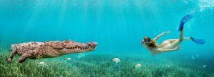 Cuban Croc